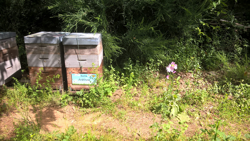 La ruche Aréthuse