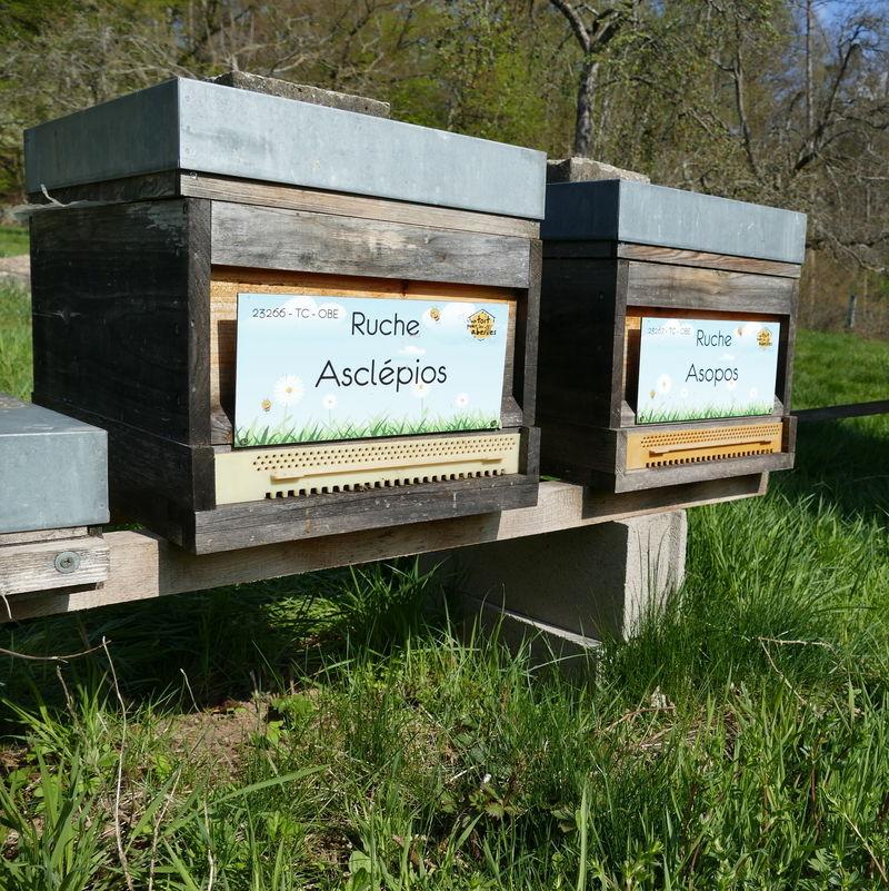 La ruche Asclépios