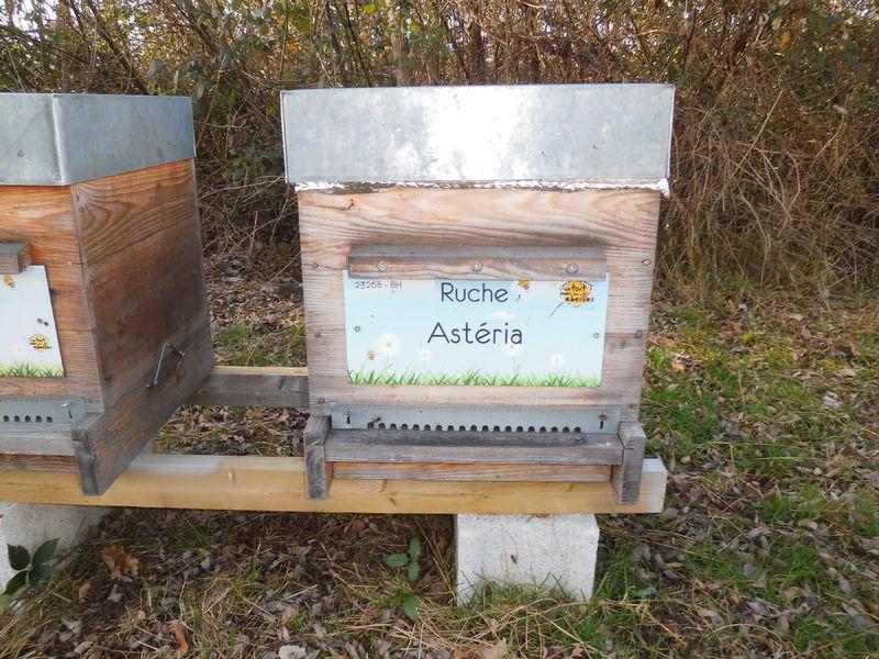 La ruche Astéria
