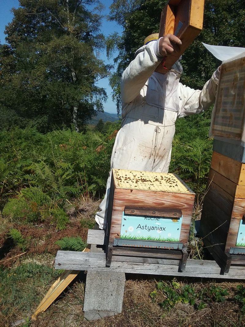 La ruche Astyaniax