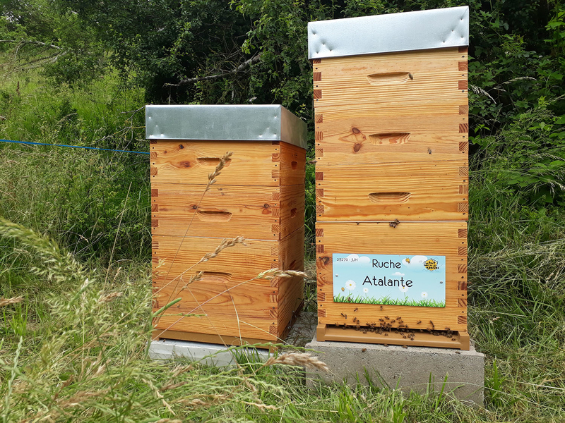 La ruche Atalante