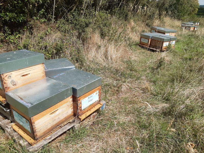 La ruche Atlas