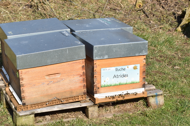 La ruche Atrides