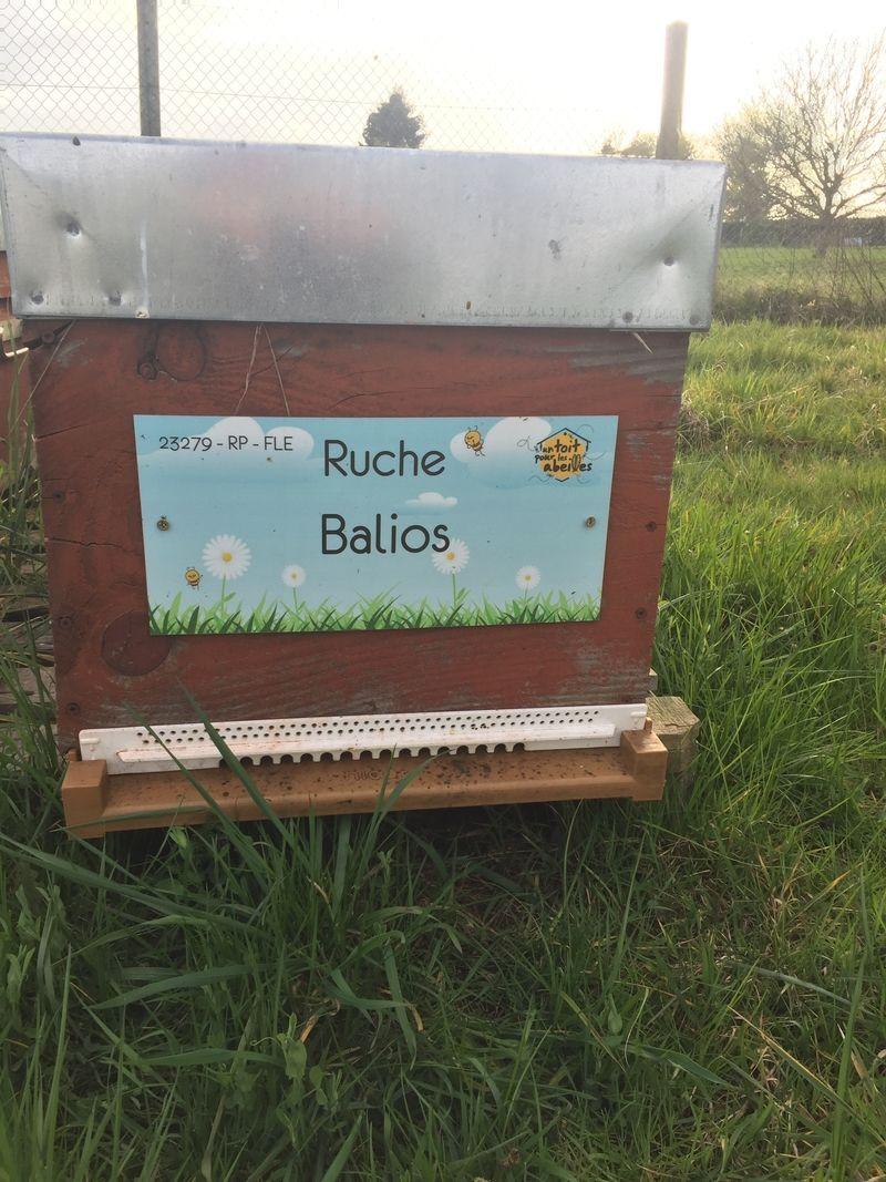 La ruche Balios