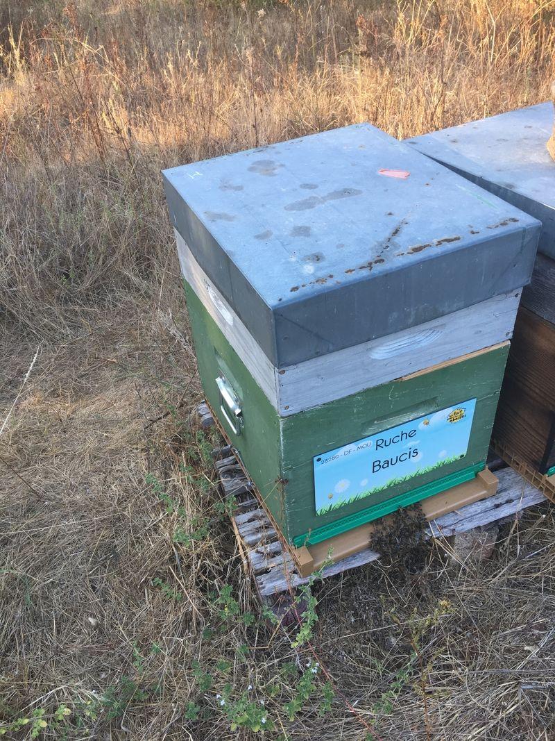 La ruche Baucis