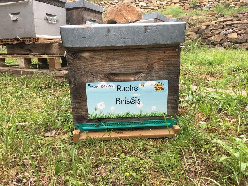 La ruche Briséis
