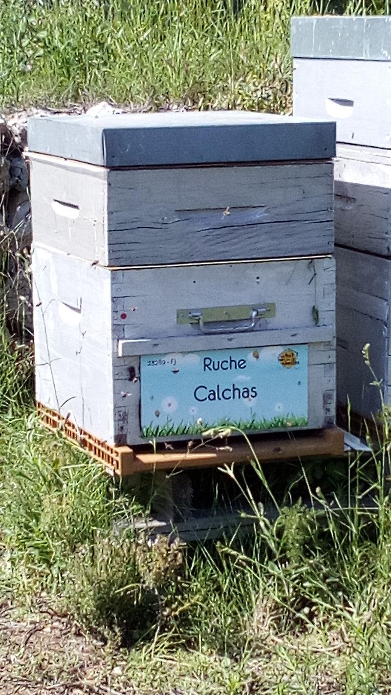 La ruche Calchas