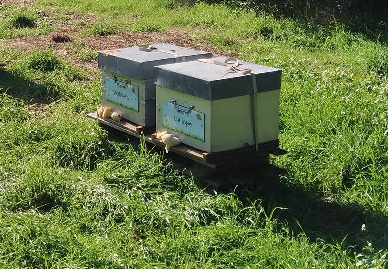 La ruche Calliope