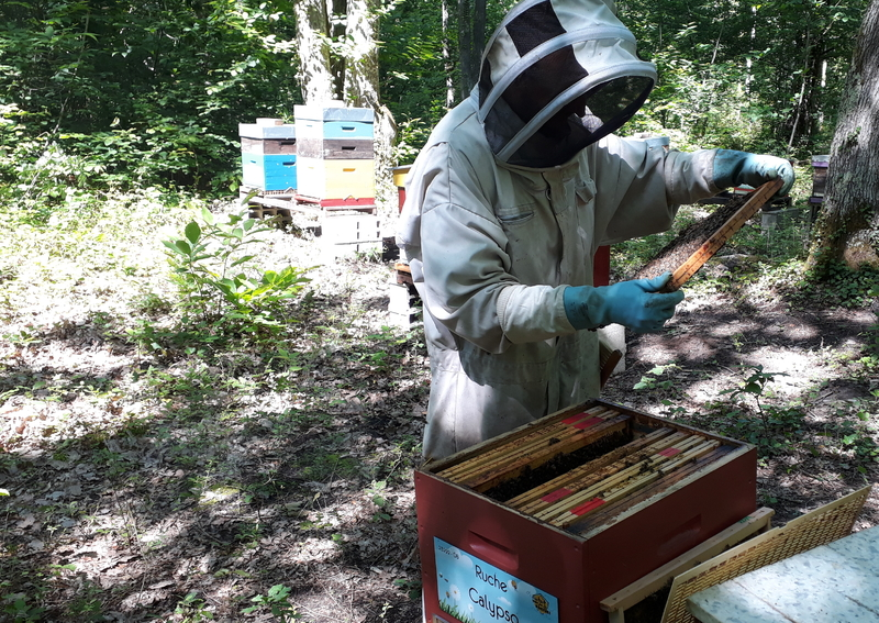 La ruche Calypso