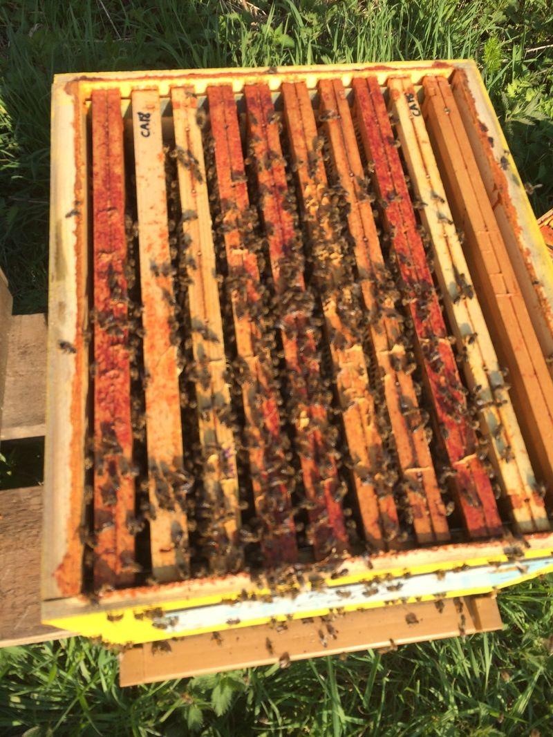 La ruche Catre