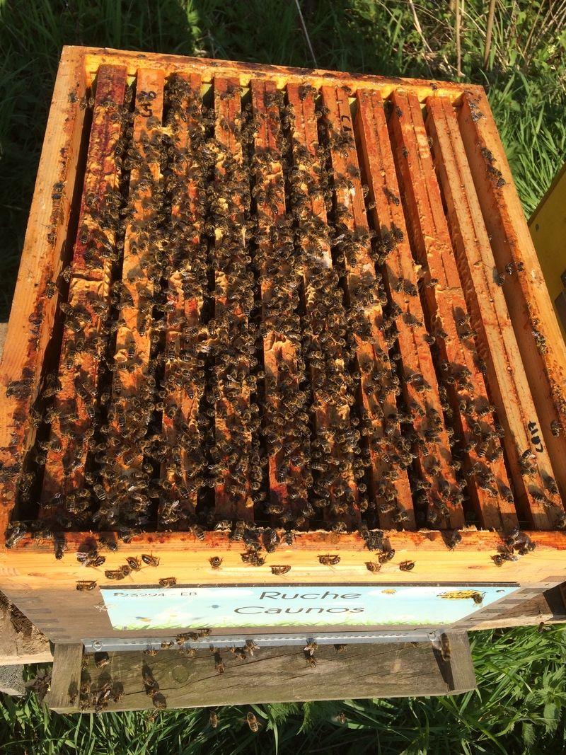 La ruche Caunos