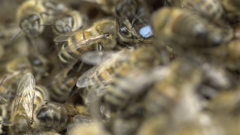 La ruche Cercopes