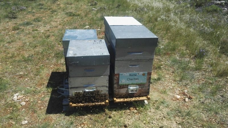 La ruche Charites