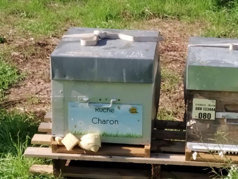 La ruche Charon
