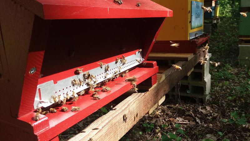 La ruche Cronos