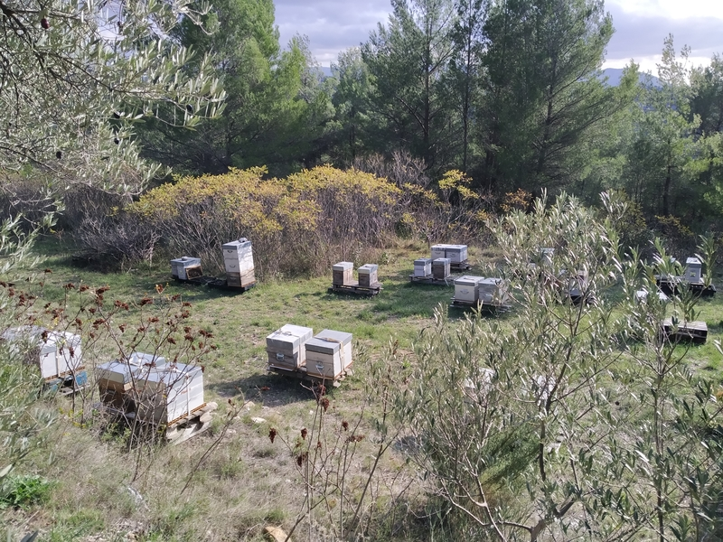 La ruche Ctésylla