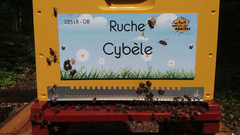 La ruche Cybèle