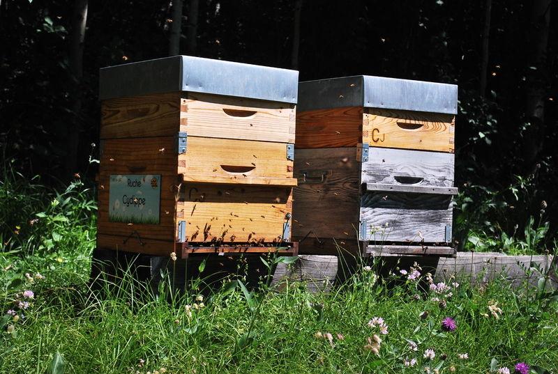 La ruche Cydippe