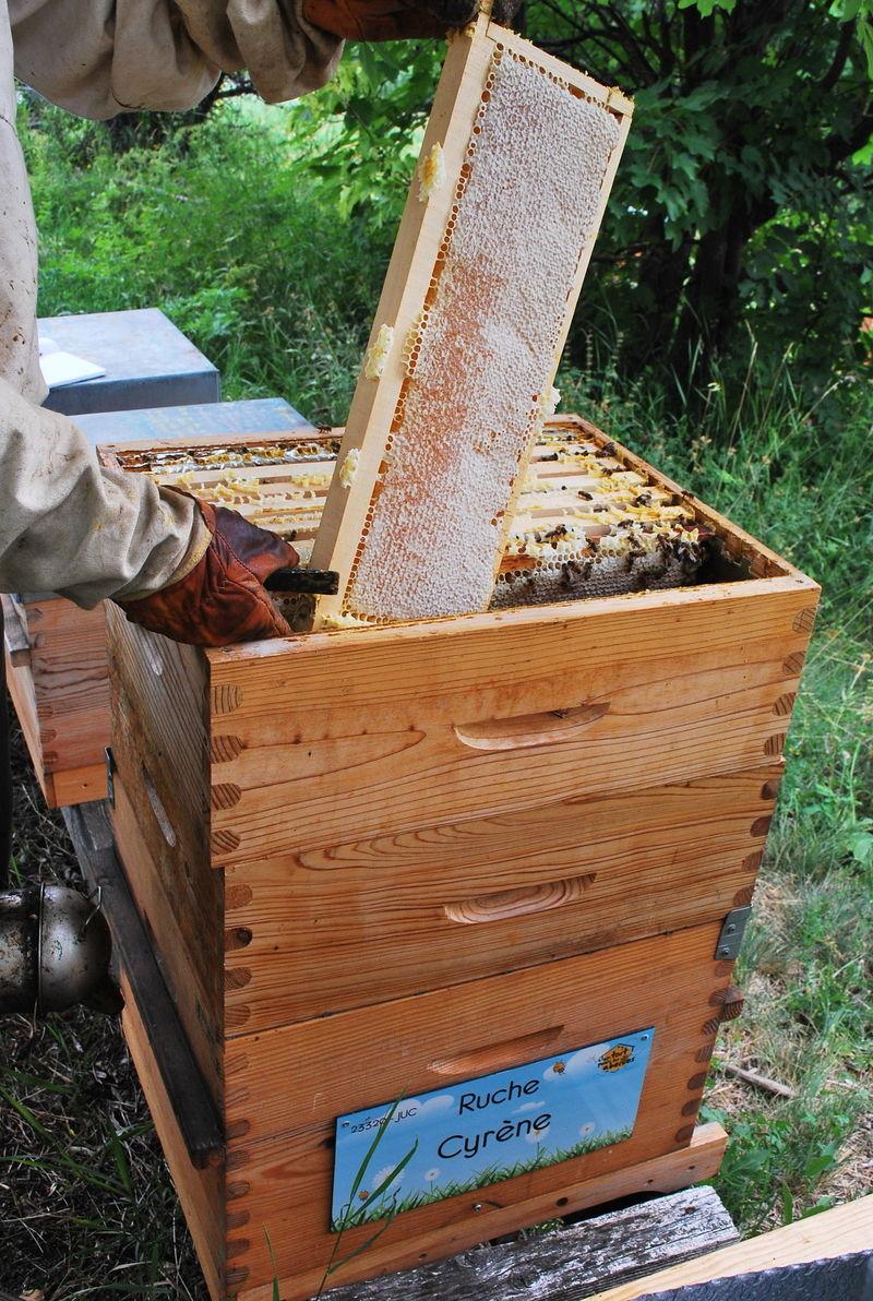 La ruche Cyrène
