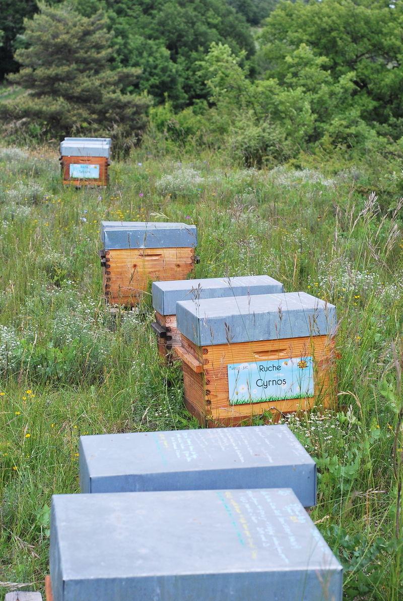La ruche Cyrnos