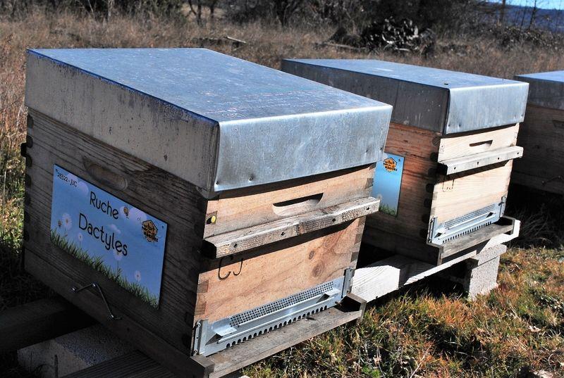 La ruche Dactyles