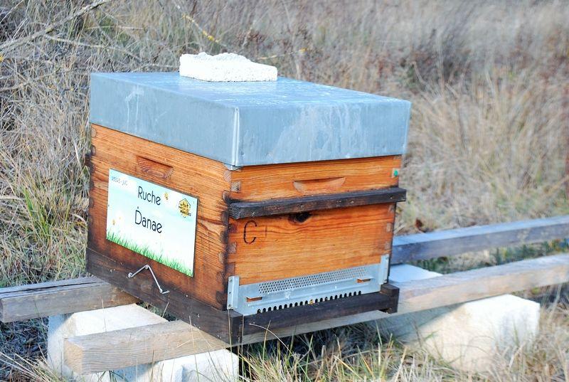 La ruche Danae