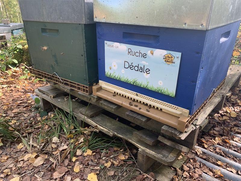 La ruche Dédale