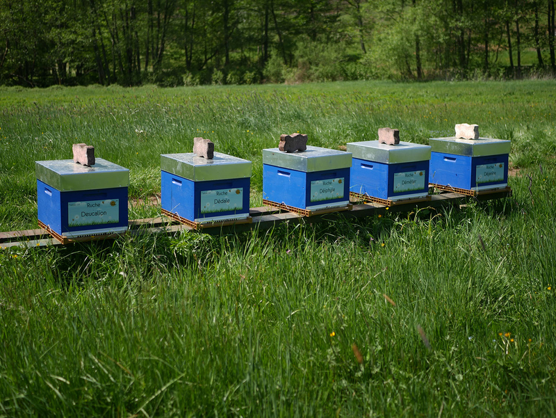 La ruche Deucalion