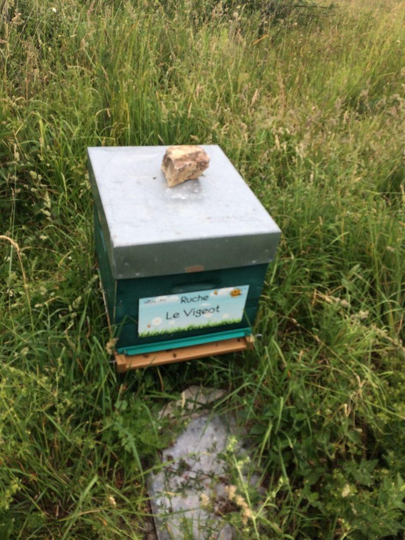 La ruche Le Vigeot
