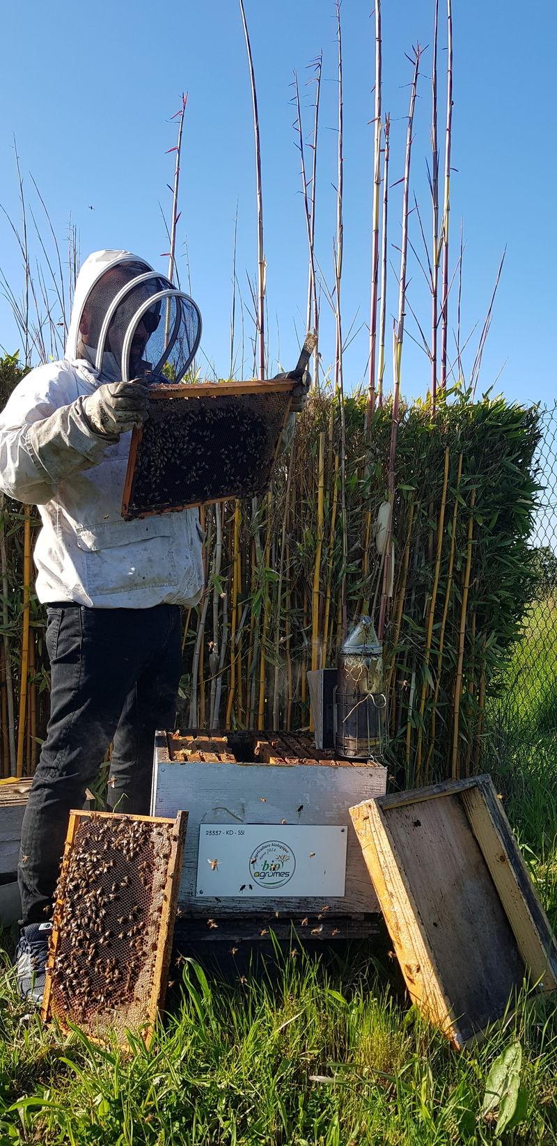 La ruche LES AGRUMES DE LA MEDITERRANEE