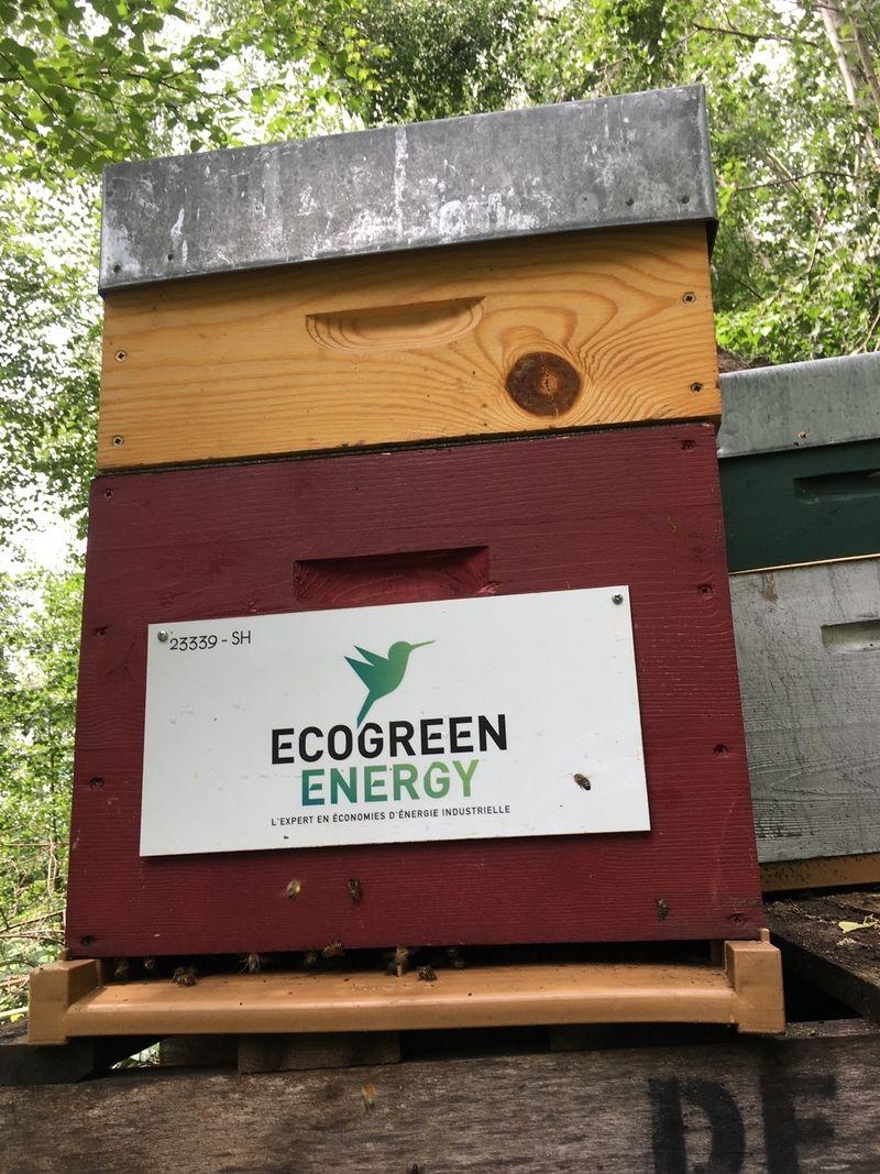 La ruche Ecogreenenergy