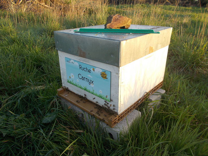 La ruche Carnyx