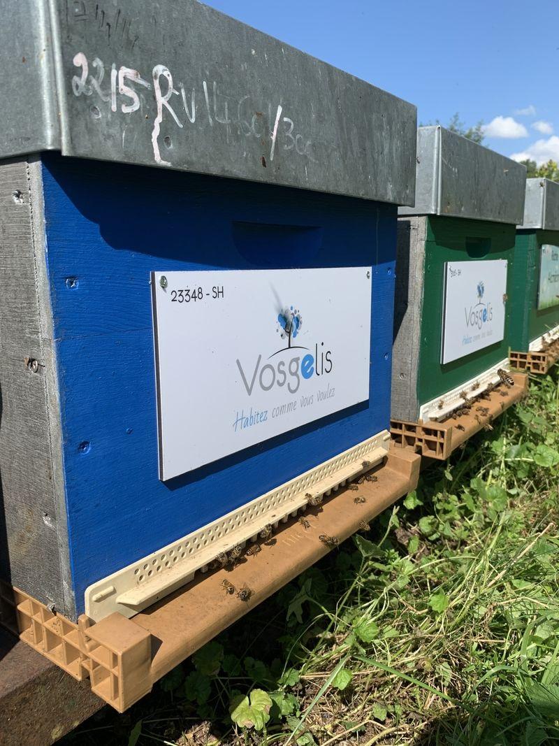 La ruche VOSGELIS