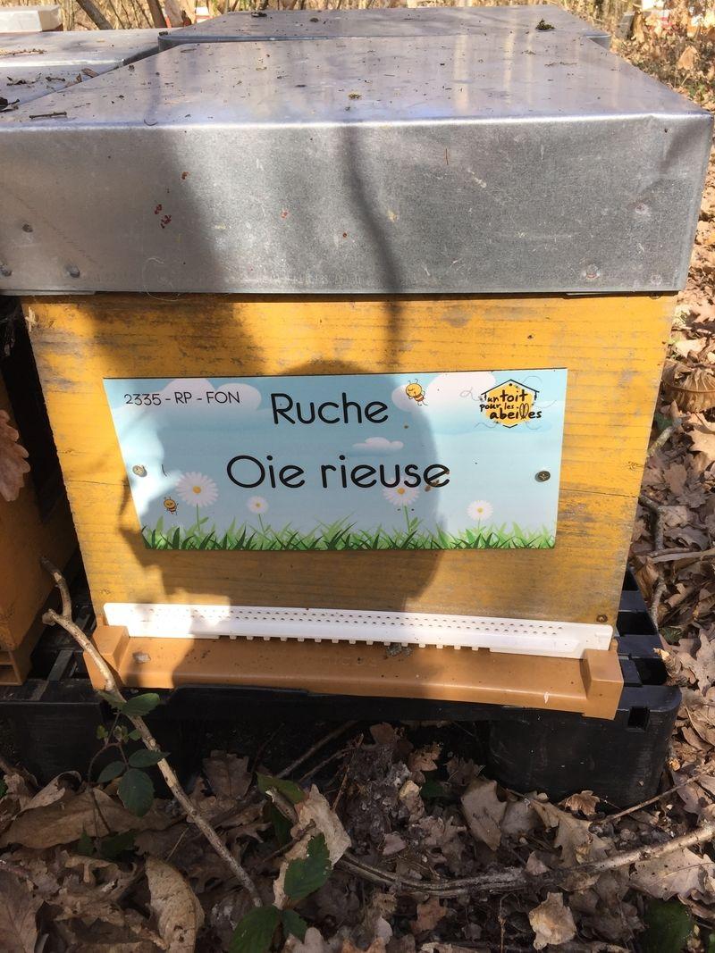 La ruche Oie rieuse