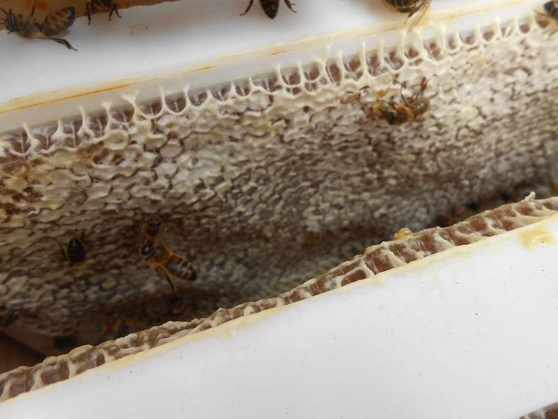 La ruche Gerswinde de Saxe