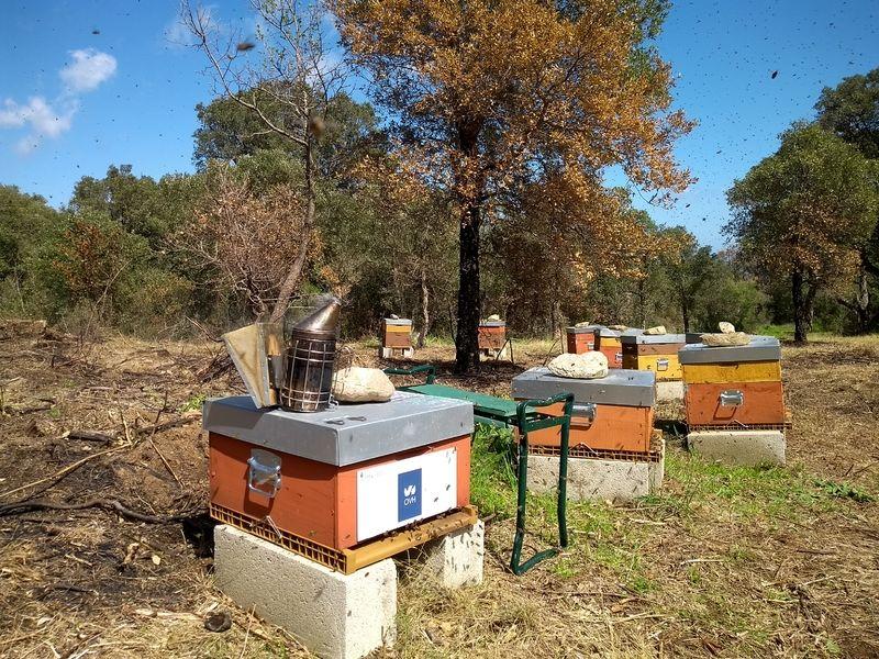La ruche Ovh brest
