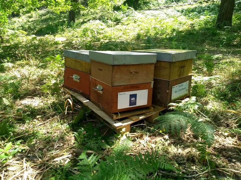 La ruche Ovhcloud brest