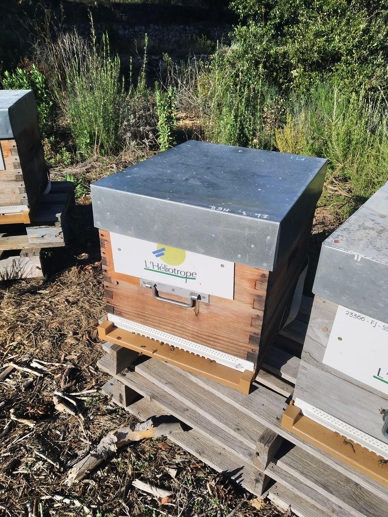 La ruche CENTRE L