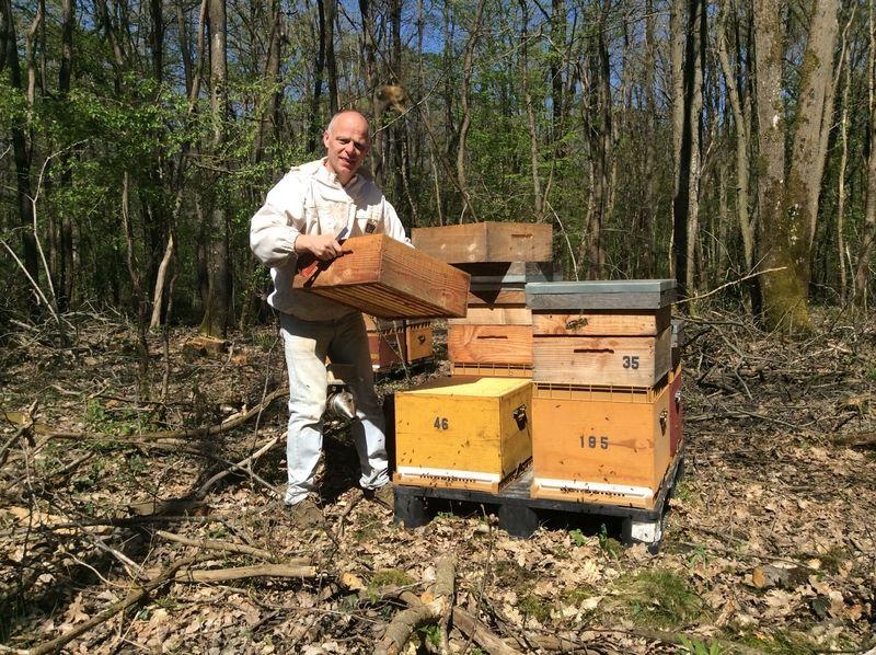 La ruche Pierre cattier sas