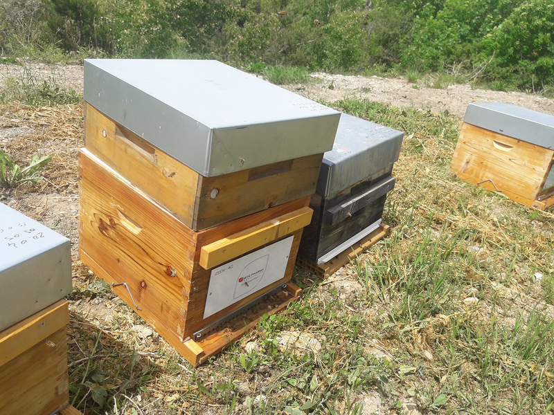 La ruche Laboratoires FORTEPHARMA