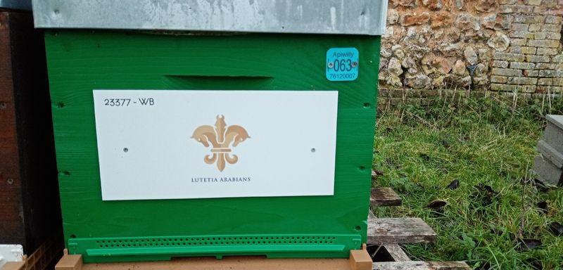 La ruche Lutetia Arabians SARL