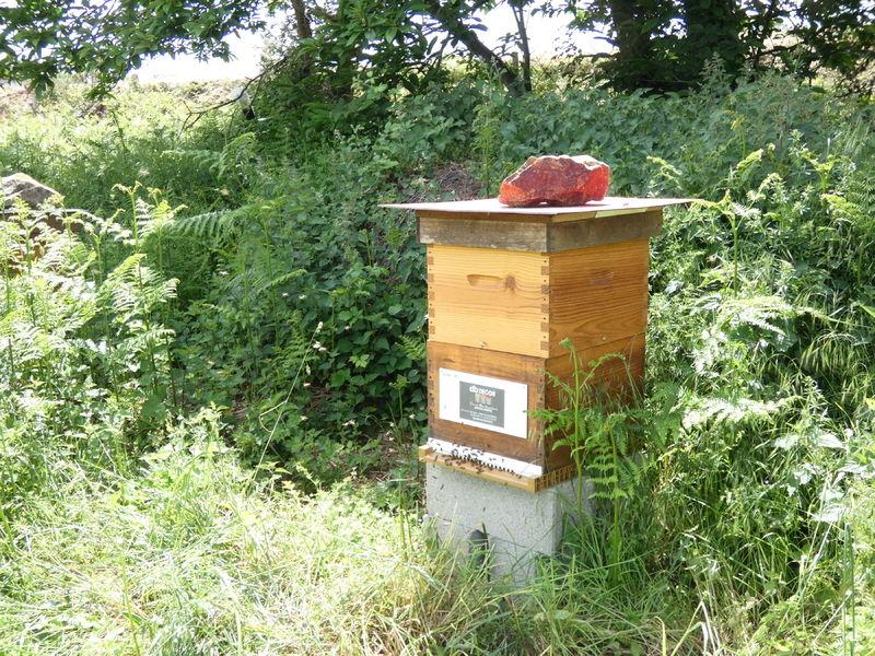 La ruche Artisan peintre   DB decor