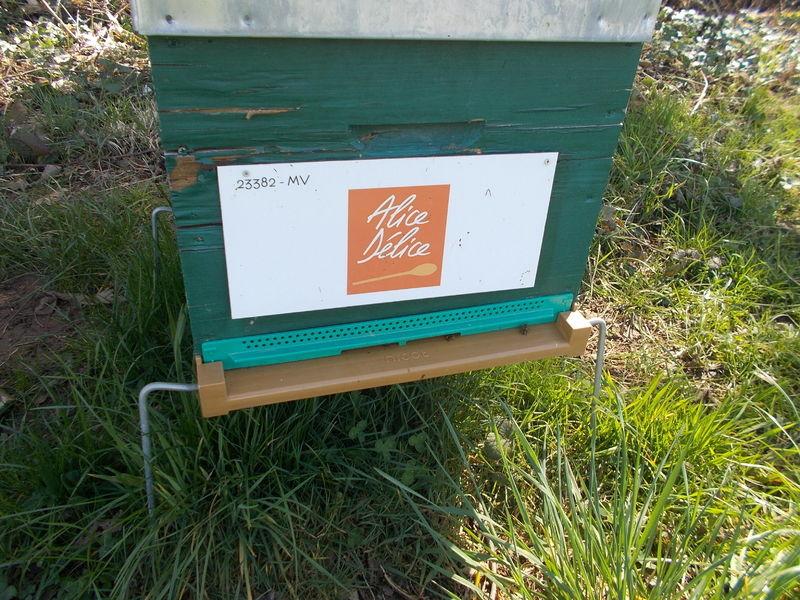 La ruche Alice Délice Thiais