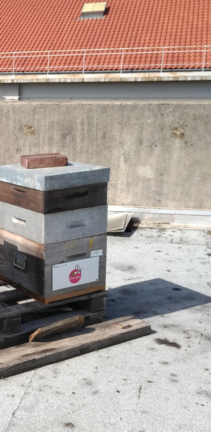 La ruche PINK LADY