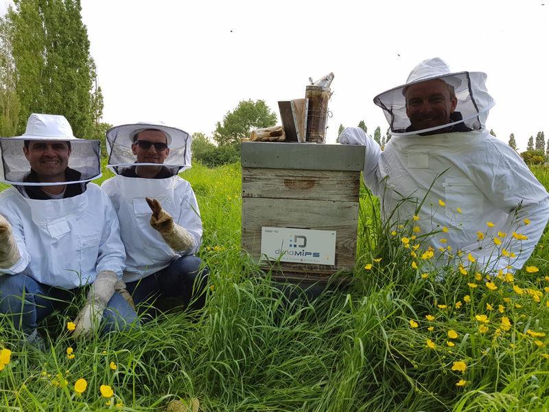 La ruche dynaMIPS