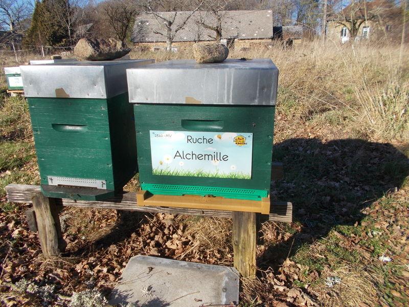 La ruche Alchemille