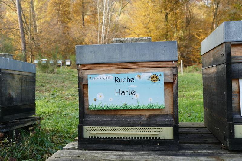 La ruche Harle