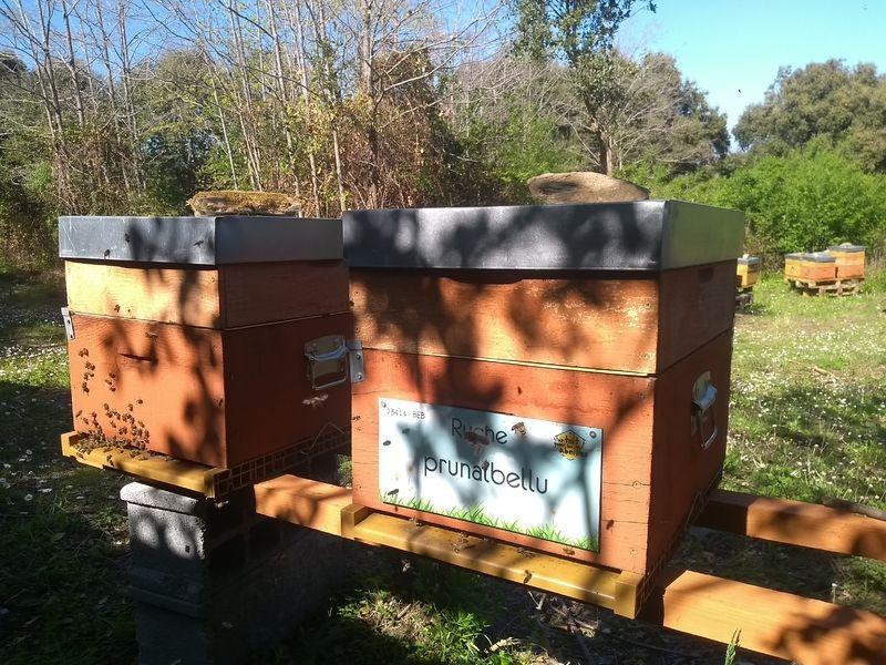 La ruche Prunalbellu
