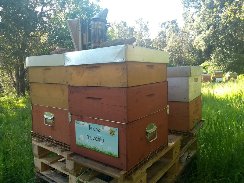 La ruche Mucchiu