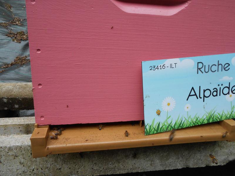La ruche Alpaïde